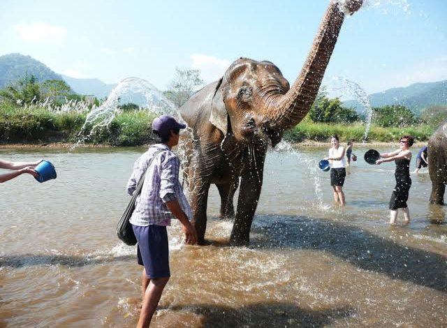 Photo of How to Find an Ethical Elephant Sanctuary in Thailand